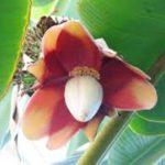 abaka-bitkisi