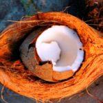 coconut lifi