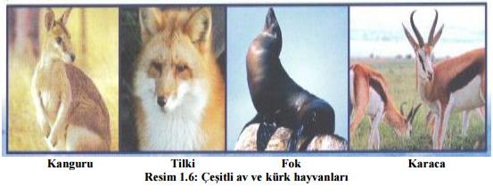 cesitli-av-ve-kurk-hayvanlari
