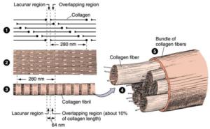 collagen yarn