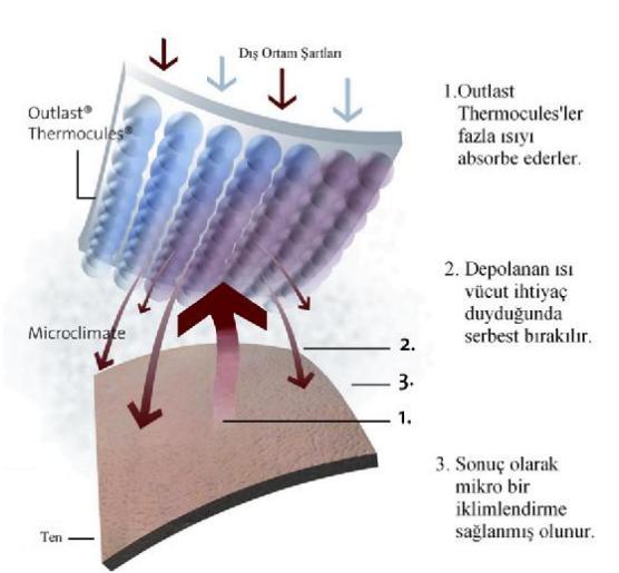 termocules
